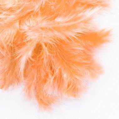 Plunksnos 5-12cm, 5g, abrikosų sp.