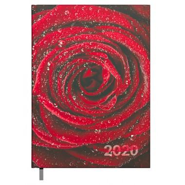Darbo knyga A5 2417153652 rose